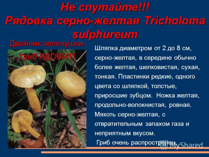 Не спутайте!!! Рядовка серно-желтая Tricholoma sulphureum Шляпка диаметром от 2 до 8 см, серно-желтая, в середине обычно более желтая, шелковистая, сухая, тонкая. Пластинки редкие, одного цвета со шляпкой, толстые, приросшие зубцом. Ножка желтая, про