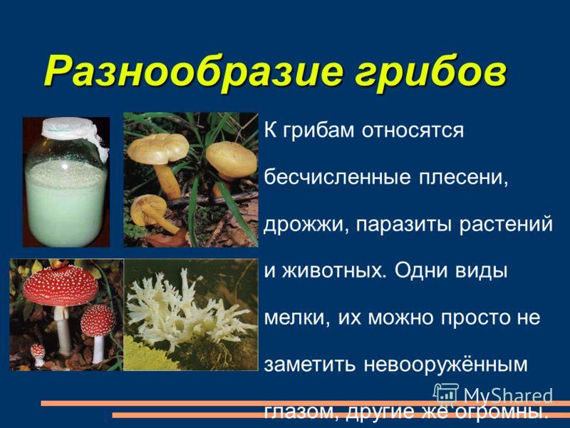 К грибам относятся бесчисленные плесени, дрожжи, паразиты растений и животных. Одни виды мелки, их можно просто не заметить невооружённым глазом, другие же огромны. Разнообразие грибов