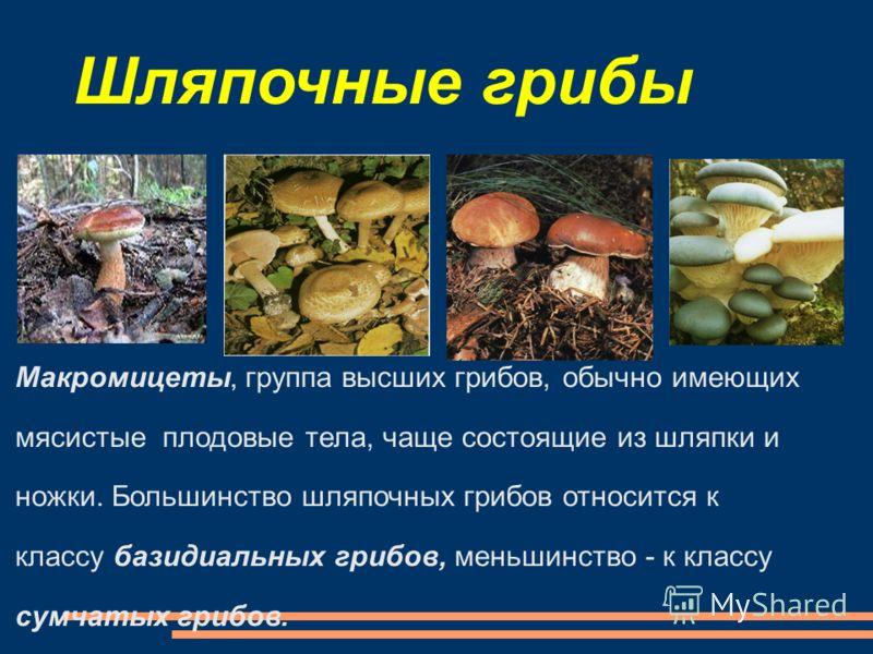 Шляпочные грибы Макромицеты, группа высших грибов, обычно имеющих мясистые плодовые тела, чаще состоящие из шляпки и ножки. Большинство шляпочных грибов относится к классу базидиальных грибов, меньшинство - к классу сумчатых грибов.