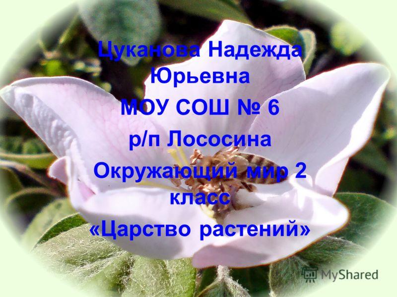 1 Цуканова Надежда Юрьевна МОУ СОШ 6 р/п Лососина Окружающий мир 2 класс «Царство растений»