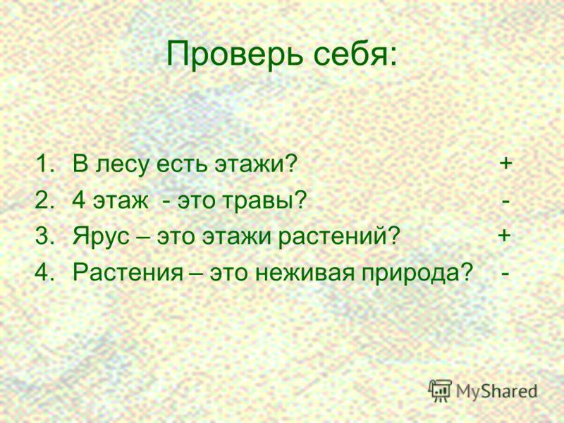 13 Проверь себя: 1.В лесу есть этажи? + 2.4 этаж - это травы? - 3.Ярус – это этажи растений? + 4.Растения – это неживая природа? -