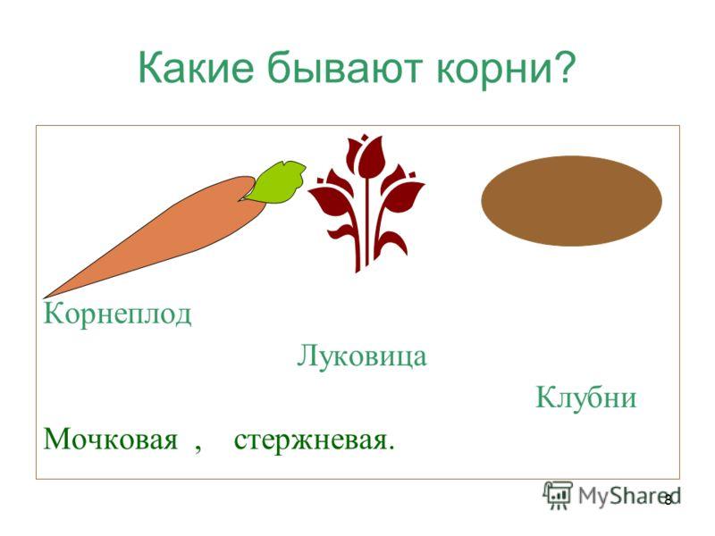 8 Какие бывают корни? Корнеплод Луковица Клубни Мочковая, стержневая.