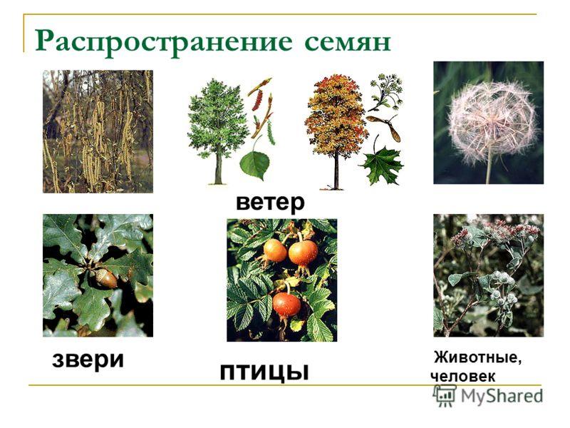 Чем больше образуется семян, тем… больше может появиться новых растений.
