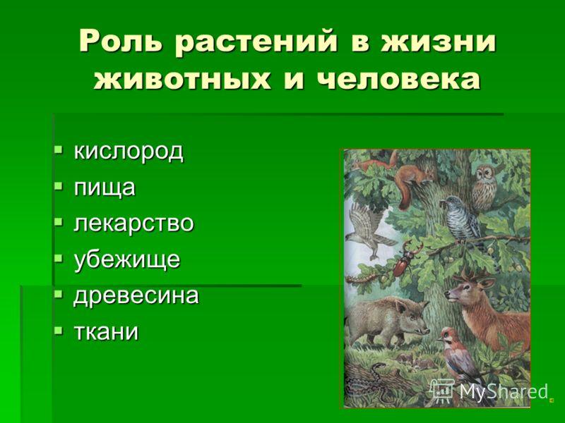 Окружающий мир роль растений в жизни