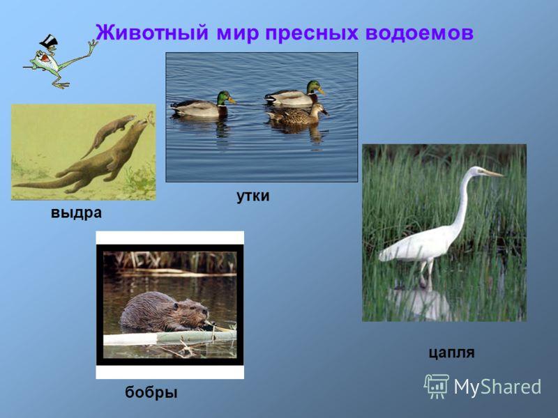 цапля утки бобры выдра