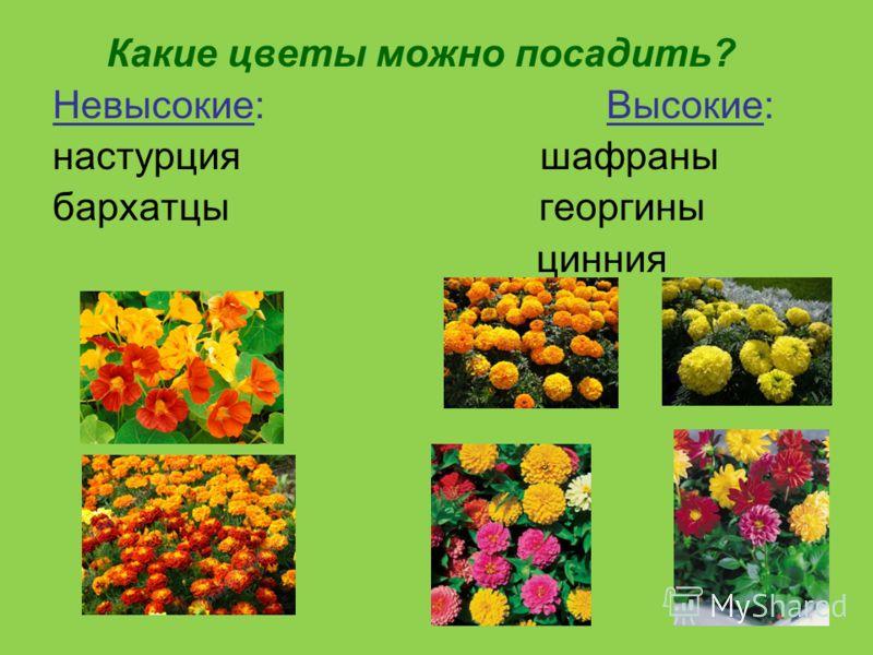 Какие цветы можно посадить? Невысокие: Высокие: настурция шафраны бархатцы георгины цинния