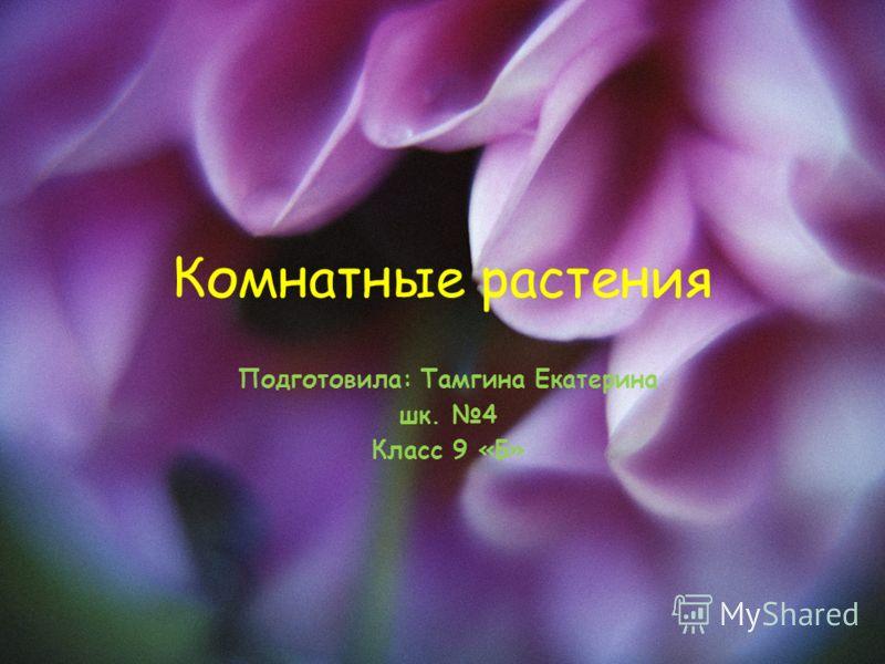 Комнатные растения Подготовила: Тамгина Екатерина шк. 4 Класс 9 «Б»