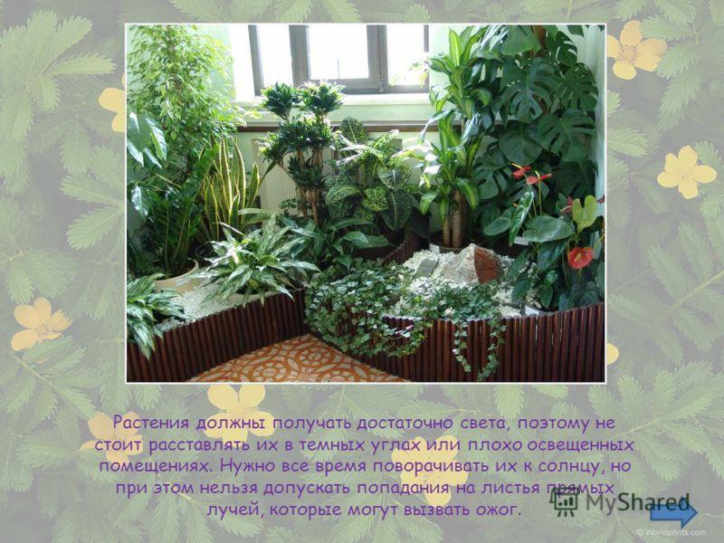 Растения должны получать достаточно света, поэтому не стоит расставлять их в темных углах или плохо освещенных помещениях. Нужно все время поворачивать их к солнцу, но при этом нельзя допускать попадания на листья прямых лучей, которые могут вызвать