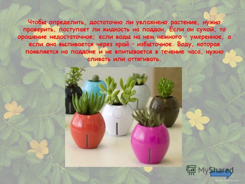 Чтобы определить, достаточно ли увлажнено растение, нужно проверить, поступает ли жидкость на поддон. Если он сухой, то орошение недостаточное; если воды на нем немного – умеренное, а если она выливается через край – избыточное. Воду, которая появляе