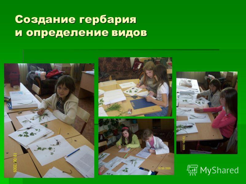 Создание гербария и определение видов