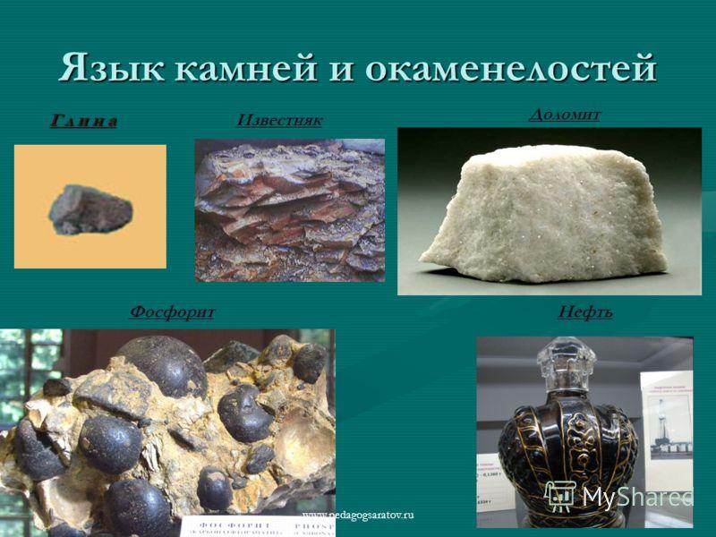 Язык камней и окаменелостей Г л и н а Известняк Нефть Доломит Фосфорит www.pedagogsaratov.ru