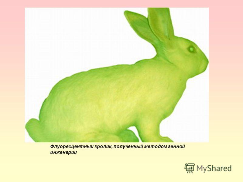 Флуоресцентный кролик, полученный методом генной инженерии