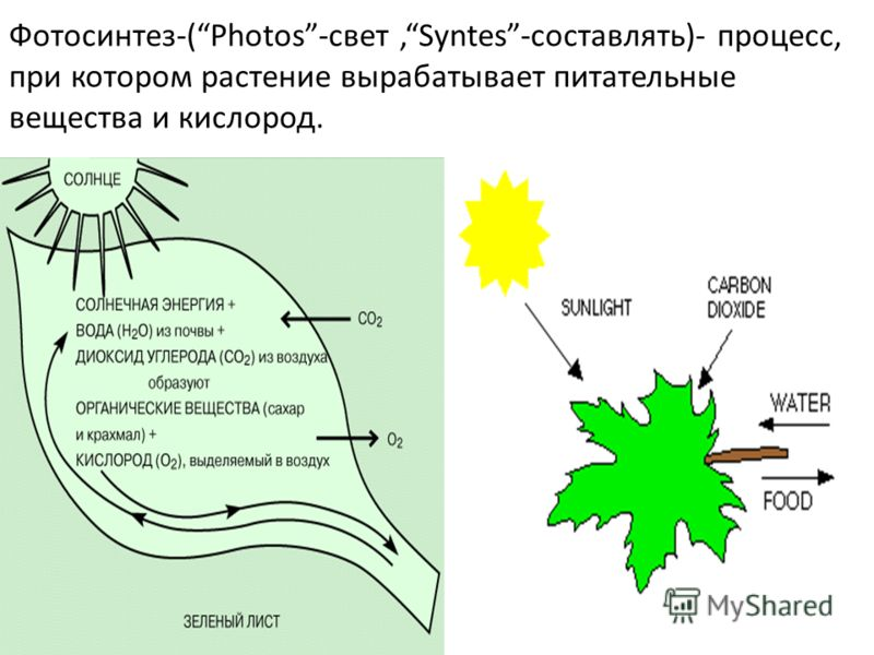 Фотосинтез-(Photos-свет,Syntes-составлять)- процесс, при котором растение вырабатывает питательные вещества и кислород.