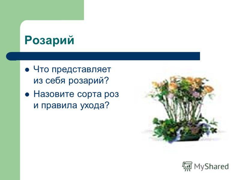 Розарий Что представляет из себя розарий? Назовите сорта роз и правила ухода?
