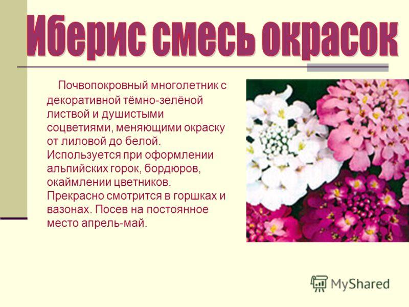 Почвопокровный многолетник с декоративной тёмно-зелёной листвой и душистыми соцветиями, меняющими окраску от лиловой до белой. Используется при оформлении альпийских горок, бордюров, окаймлении цветников. Прекрасно смотрится в горшках и вазонах. Посе