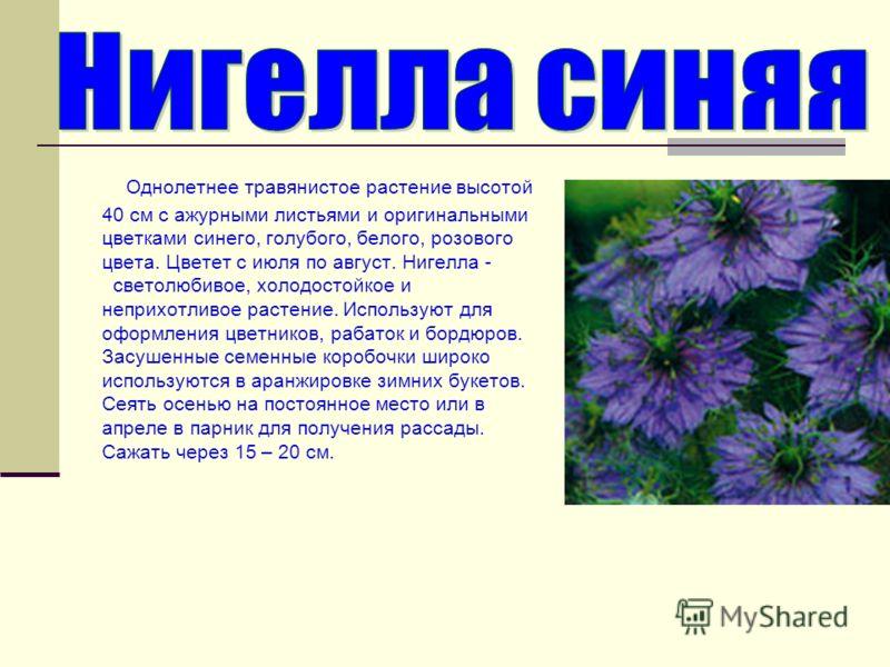 Однолетнее травянистое растение высотой 40 см с ажурными листьями и оригинальными цветками синего, голубого, белого, розового цвета. Цветет с июля по август. Нигелла - светолюбивое, холодостойкое и неприхотливое растение. Используют для оформления цв