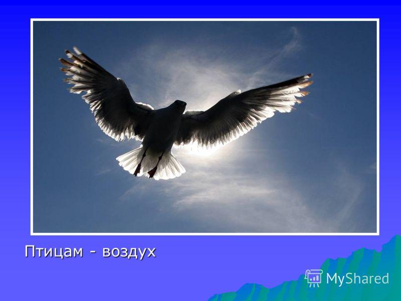 Птицам - воздух