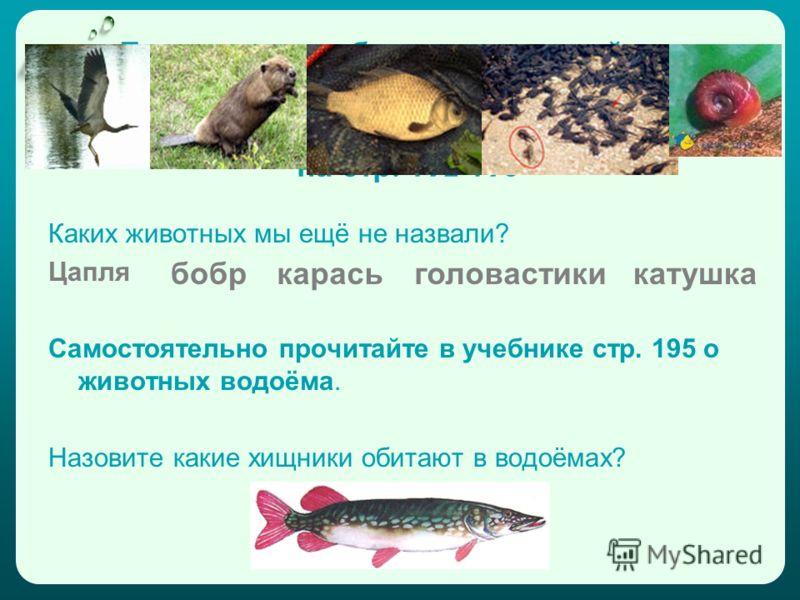 Богат и разнообразен животный мир водоёма. Познакомьтесь с ним поближе в учебнике на стр. 192-193 Каких животных мы ещё не назвали? Цапля Самостоятельно прочитайте в учебнике стр. 195 о животных водоёма. Назовите какие хищники обитают в водоёмах? боб