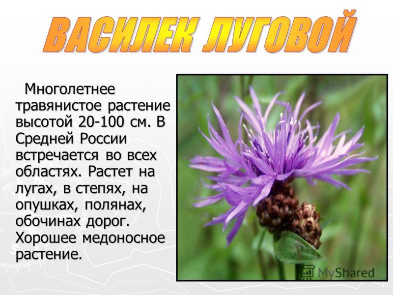 Многолетнее травянистое растение высотой 20-100 см. В Средней России встречается во всех областях. Растет на лугах, в степях, на опушках, полянах, обочинах дорог. Хорошее медоносное растение. Многолетнее травянистое растение высотой 20-100 см. В Сред
