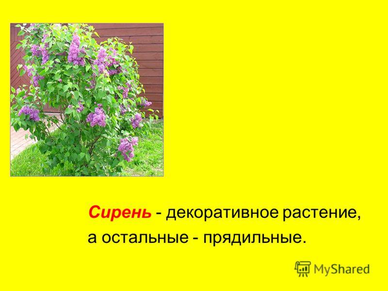 Лён - травянистое растение, а остальные - кустарники.