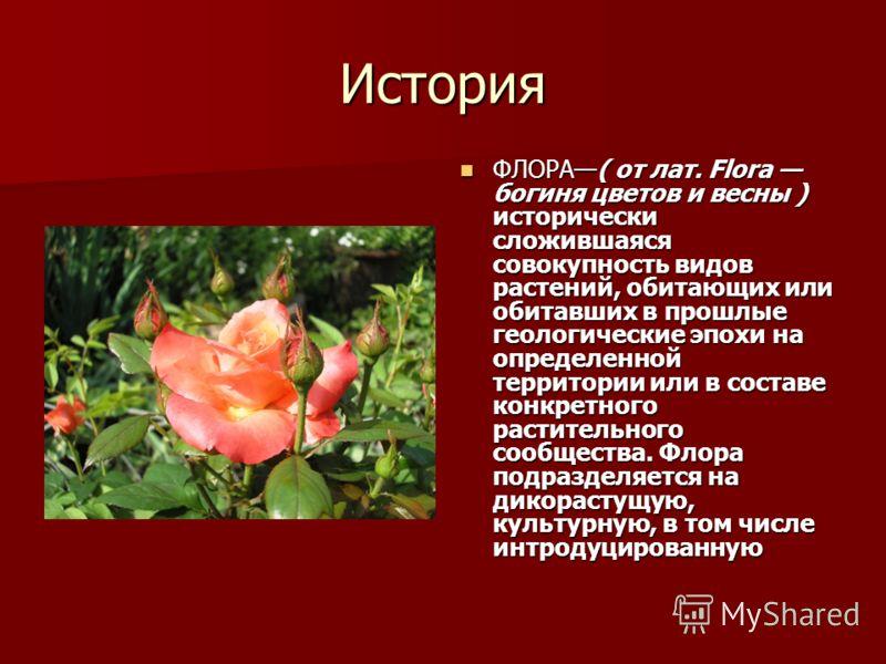 История ФЛОРА( от лат. Flora богиня цветов и весны ) исторически сложившаяся совокупность видов растений, обитающих или обитавших в прошлые геологические эпохи на определенной территории или в составе конкретного растительного сообщества. Флора подра