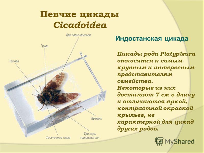 Звук цикад скачать бесплатно