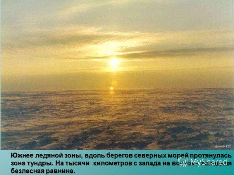 Южнее ледяной зоны, вдоль берегов северных морей протянулась зона тундры. На тысячи километров с запада на восток – холодная безлесная равнина.