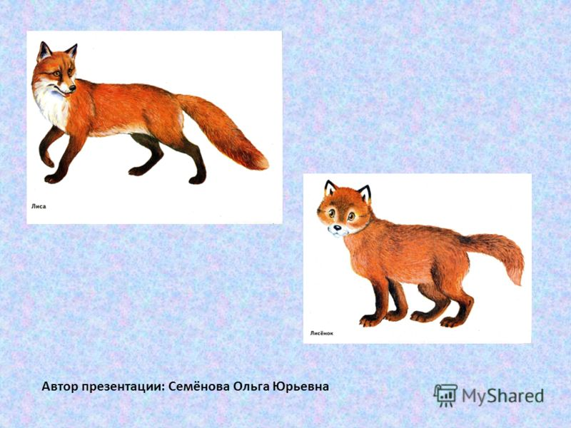 Автор презентации: Семёнова Ольга Юрьевна