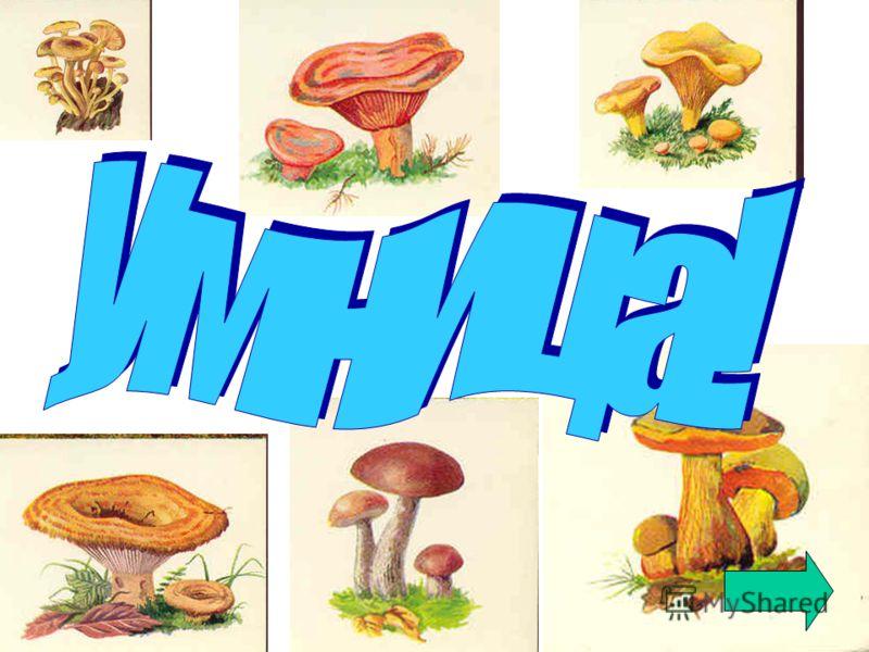 Березовики Грузди желтые Рыжики Опенки осенние Дубовики обыкновенные Лисички Волнушки розовые Сыроежки Белые грибы Определите,что это за грибы?
