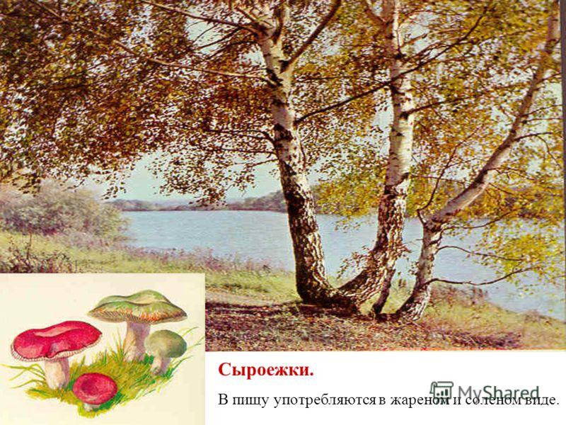 Дубовик Обыкновенный. Другое название: синяк. В пищу употребляется в вареном и жареном виде.