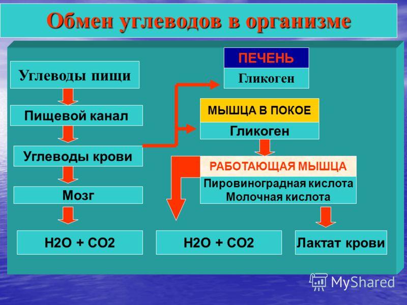 Углеводы пищи Пищевой канал Углеводы крови Мозг ПЕЧЕНЬ МЫШЦА В ПОКОЕ РАБОТАЮЩАЯ МЫШЦА H2O + CO2Лактат крови Обмен углеводов в организме Гликоген Пировиноградная кислота Молочная кислота H2O + CO2