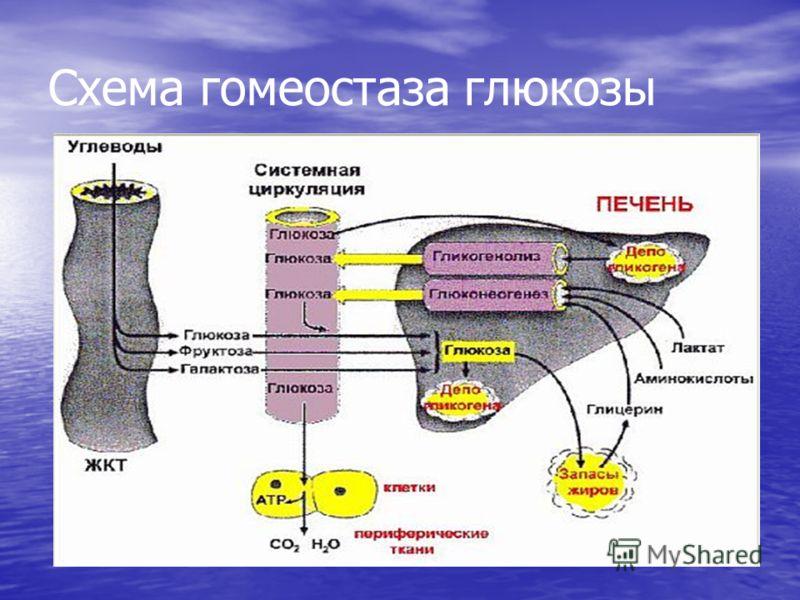 Схема гомеостаза глюкозы