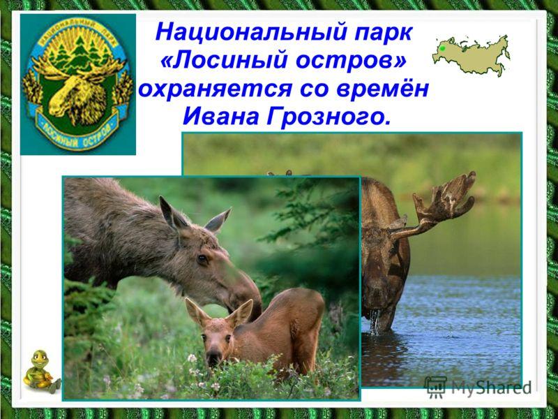 Национальный парк «Лосиный остров» охраняется со времён Ивана Грозного.