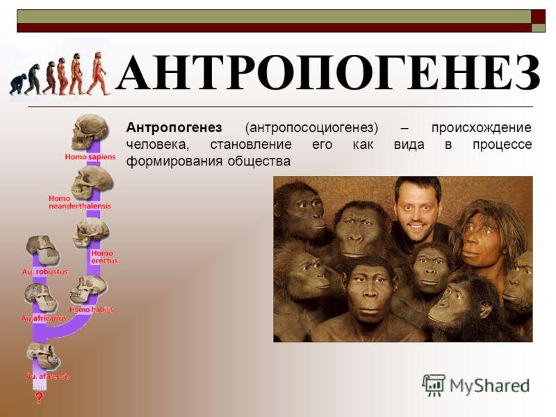 1 АНТРОПОГЕНЕЗ Антропогенез (антропосоциогенез) – происхождение человека, становление его как вида в процессе формирования общества