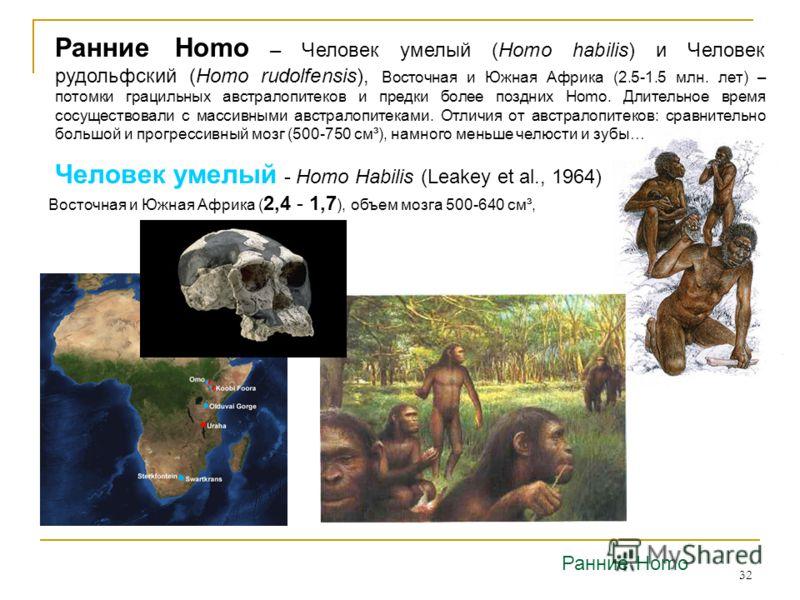 32 Человек умелый - Homo Habilis (Leakey et al., 1964) Ранние Homo Восточная и Южная Африка ( 2,4 - 1,7 ), объем мозга 500-640 см³, Ранние Homo – Человек умелый (Homo habilis) и Человек рудольфский (Homo rudolfensis), Восточная и Южная Африка (2.5-1.