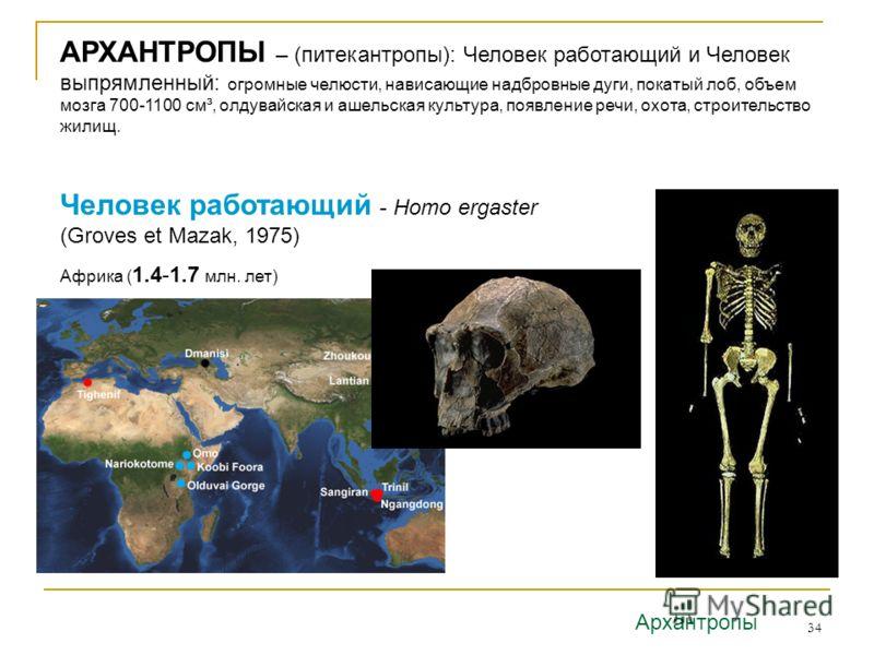 34 Человек работающий - Homo ergaster (Groves et Mazak, 1975) Африка ( 1.4-1.7 млн. лет) Архантропы АРХАНТРОПЫ – (питекантропы): Человек работающий и Человек выпрямленный: огромные челюсти, нависающие надбровные дуги, покатый лоб, объем мозга 700-110