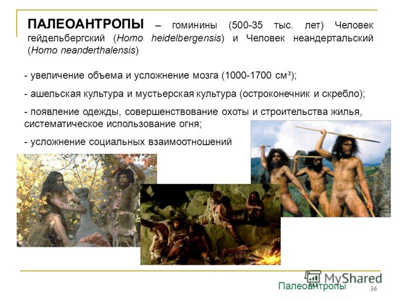 36 ПАЛЕОАНТРОПЫ – гоминины (500-35 тыс. лет) Человек гейдельбергский (Homo heidelbergensis) и Человек неандертальский (Homo neanderthalensis) - увеличение объема и усложнение мозга (1000-1700 см³); - ашельская культура и мустьерская культура (остроко