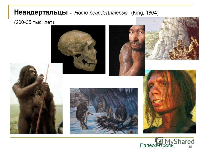 38 Неандертальцы - Homo neanderthalensis (King, 1864) (200-35 тыс. лет) Палеоантропы