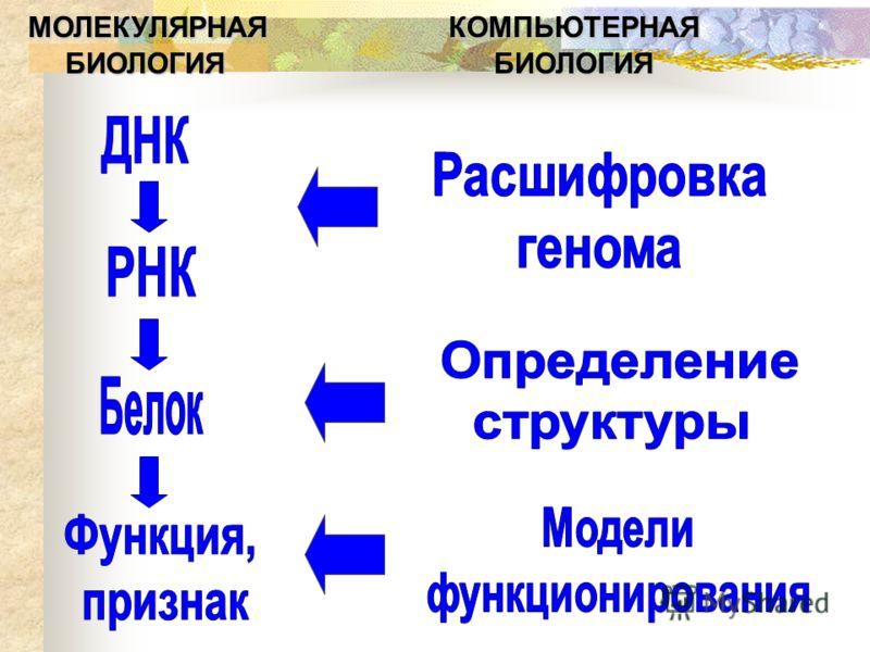 МОЛЕКУЛЯРНАЯ КОМПЬЮТЕРНАЯ БИОЛОГИЯ БИОЛОГИЯ БИОЛОГИЯ БИОЛОГИЯ