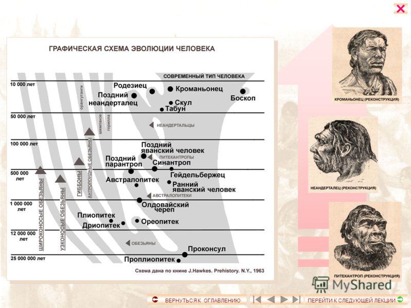 Возникновение государства и права Власть и нормы поведения в первобытном обществе. Человечество, в процессе эволюции, выделилось из животного мира около 3 - 2,5 миллионов лет назад. Находки останков древнейших человекоподобных гоминид обнаружены в Эф