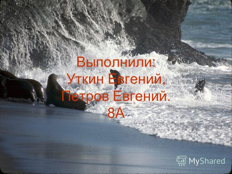 Выполнили: Уткин Евгений, Петров Евгений. 8А