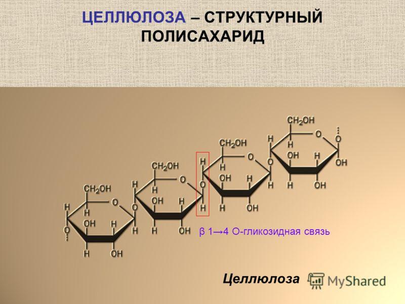 ЦЕЛЛЮЛОЗА – СТРУКТУРНЫЙ ПОЛИСАХАРИД Целлюлоза β 14 О-гликозидная связь