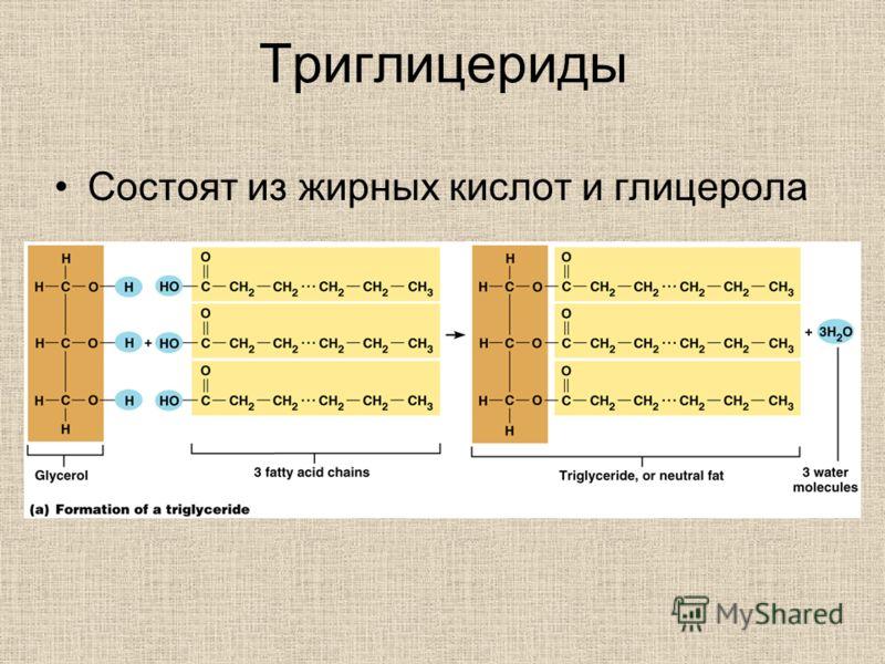 Триглицериды Состоят из жирных кислот и глицерола