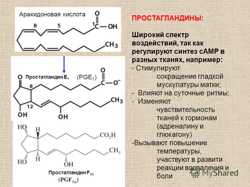Арахидоновая кислота ПРОСТАГЛАНДИНЫ: Широкий спектр воздействий, так как регулируют синтез сAMP в разных тканях, например: - Стимулируют сокращение гладкой мускулатуры матки; - Влияют на суточные ритмы; - Изменяют чувствительность тканей к гормонам (