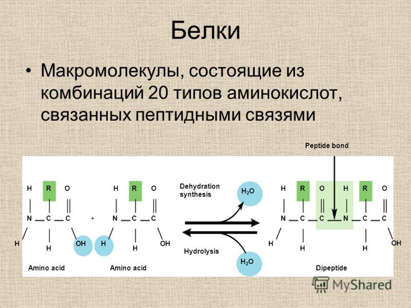 Белки Макромолекулы, состоящие из комбинаций 20 типов аминокислот, связанных пептидными связями Amino acid Dehydration synthesis Hydrolysis Dipeptide Peptide bond +N H H C R H O N H H C R CC H O H2OH2O H2OH2O N H H C R C H O N H C R C H O OH