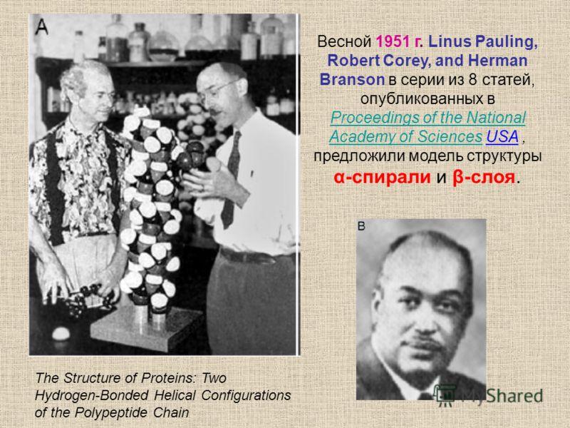 Весной 1951 г. Linus Pauling, Robert Corey, and Herman Branson в серии из 8 статей, опубликованных в Proceedings of the National Academy of SciencesProceedings of the National Academy of Sciences USA, предложили модель структуры α-спирали и β-слоя. T