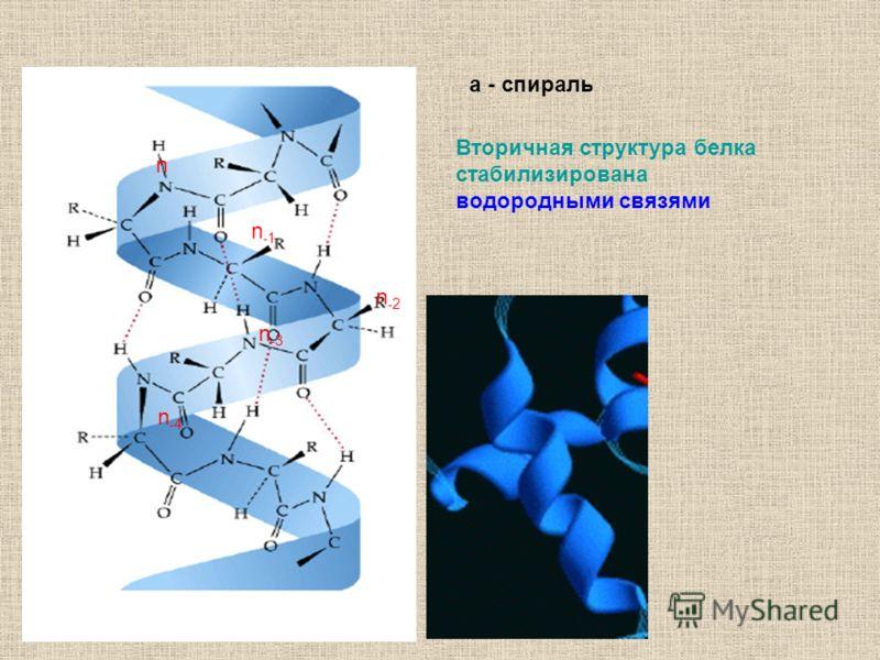 n n -4 n -3 n -2 n -1 Вторичная структура белка стабилизирована водородными связями a - спираль