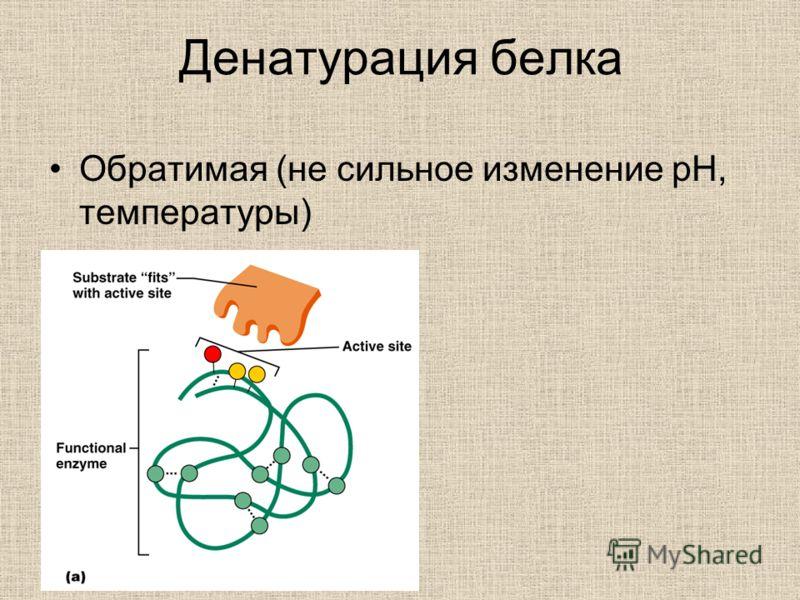 Денатурация белка Обратимая (не сильное изменение pH, температуры)