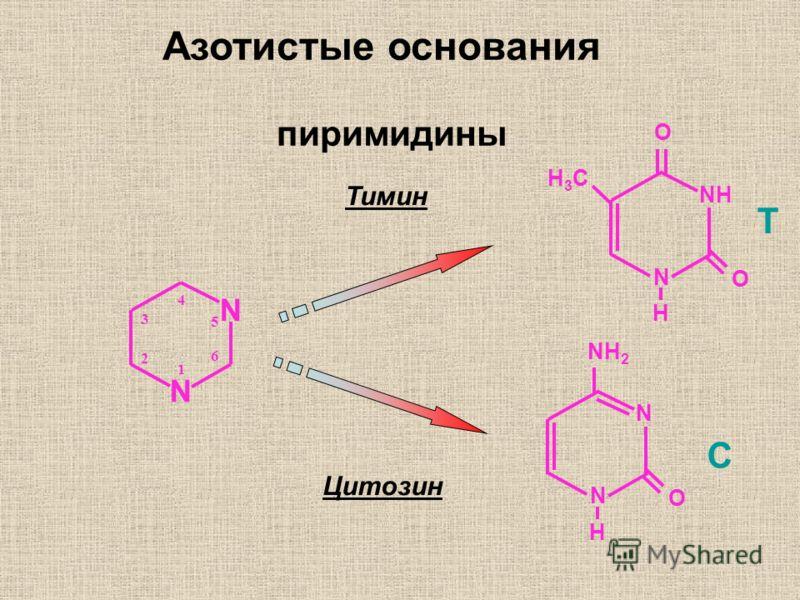 N N 5 6 1 2 3 4 Тимин Цитозин NH N O T O H H3CH3C C N N NH 2 O H Азотистые основания пиримидины