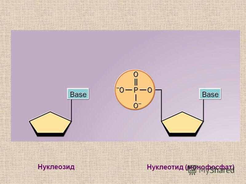 Нуклеозид Нуклеотид (монофосфат)